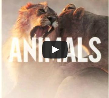 BRITHOPTV- [New Music] Maroon5 (@maroon5) – 'Animals Remix Ft. Ironik (@DJIronik)' -#Pop #Rap