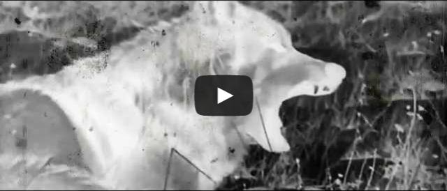 BRITHOPTV- [Music Video] Calvert (@Calvert_beatz) x K Zorro (@Kguavara) – 'The Wolves' [@SektionRed] I #UKRap #UKHipHop